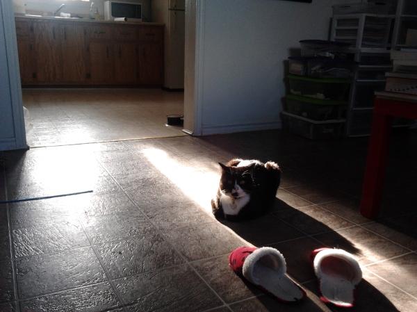 Luke being himself, sun-stealer