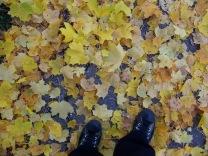 Crunching Autumn leaves on Reid Street.