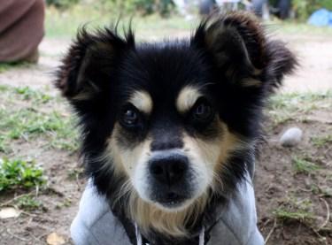 My baby dog, Kimo.