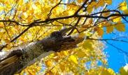 MandyPoole_autumn4