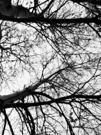 Branches of Black