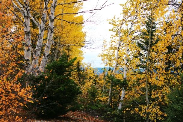 Autumn Bushes