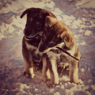 pupperdogs
