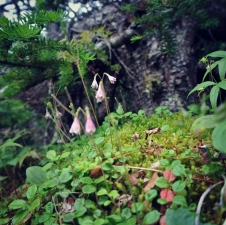 Tiny pink flowers at the edge of a hiking trail