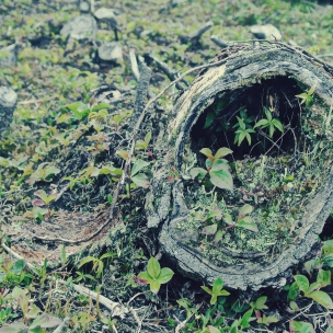 A tiny village inside an old tree stump - Fern Gully?