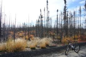 More burned woods