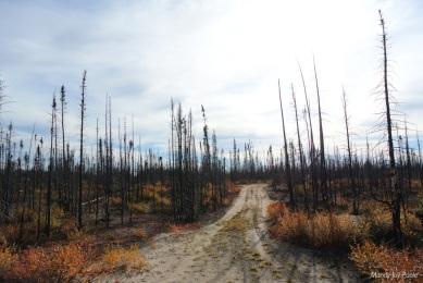 Burnt trails