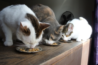 Cats and silver platters