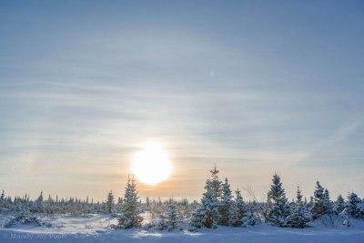 Winter Trees 2 MJP
