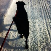 Taking Beauty for a walk.. her shadow looks evil