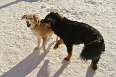 JoJo and Tango about to have a little scrap haha
