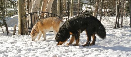 Synchronized sniffing