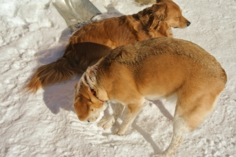 """""""I know summer's gotta be underneath this white stuff somewhere, must keep digging."""""""