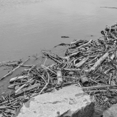 Debris in the beach at Otter Creek