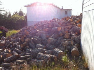 All the wood dad hauled this past winter