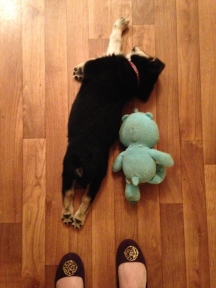 Passed out puppy