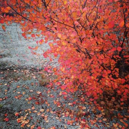 Autumn's breath