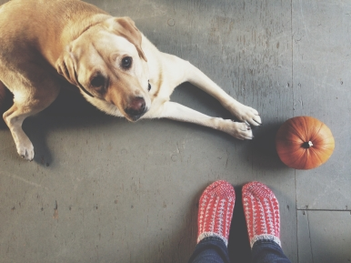 Pretty girl and the last of the pumpkins