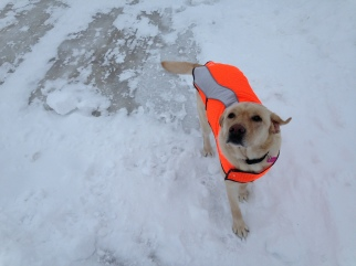 Pretty girl in her reflective vest