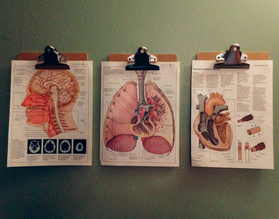 Head, lungs andheart