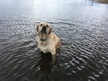 Grace loves ponds and puddles!