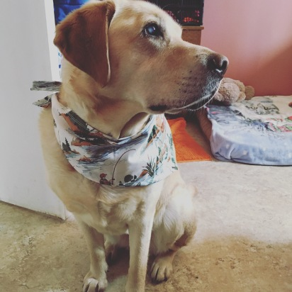 Grace's new bandana that I made for her