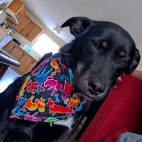 Higgs and his new bandana that I made