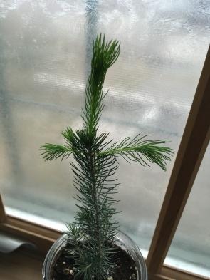 My tree, Lip, growing nicely!