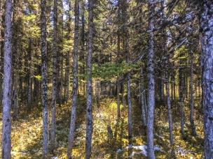 Forest lighting