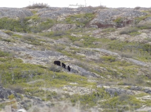 A family of bears