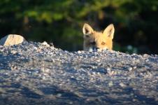 Peek-a-boo, I see you, too!