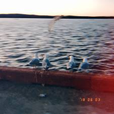 Seagulls at the Basin