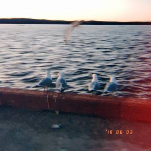 Seagulls at the Basin