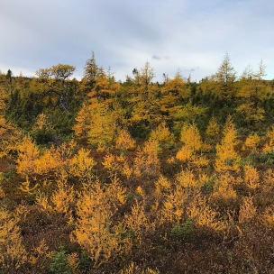 Fall on the bog