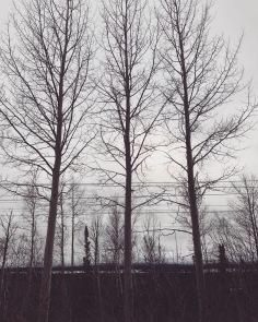 Three perfect trees