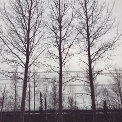 Three perfect trees