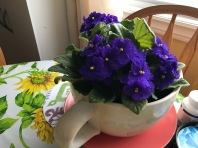 African Violet's always seem to do well at my Aunts house
