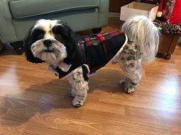 Aunt Loretta's dog Jack