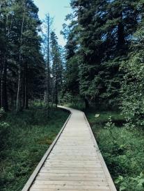 Birch Island 2