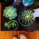 Cactus Fam